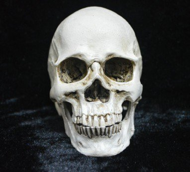 Halloween Decorative Novelty Creative Toys Horror Funny Spoof Tricks Whole Resin Skeleton Head