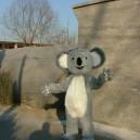 Supply Australia Koala Walking Doll Cartoon Clothing Props Costumes Kangaroo Apparel Mascot Costume
