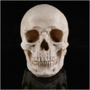Supply Halloween Items Novelty Creative Toys Horror Funny Spoof Tricks Whole Body Resin Skeleton