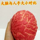 Halloween Toys Halloween Items Haunted House Horror Decoration Scary Lifelike Brains