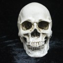 Supply Halloween Decorative Novelty Creative Toys Horror Funny Spoof Tricks Whole Resin Skeleton Head