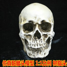 Halloween Collection Edition Genuine 1 Human Skull Model Medical Skull Resin Skull